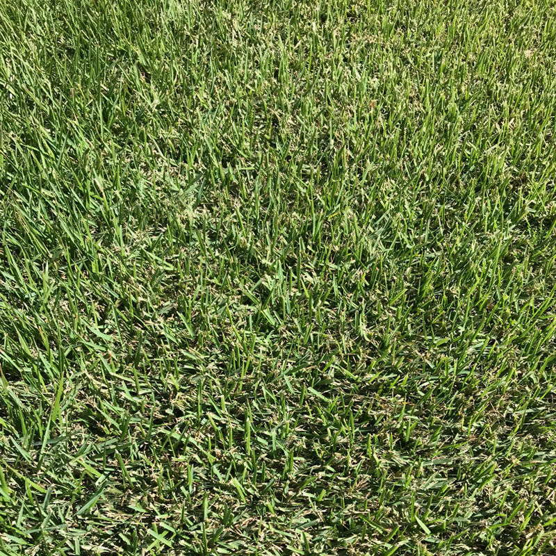 Zoysia Grass Sod for Sale in Arkansas